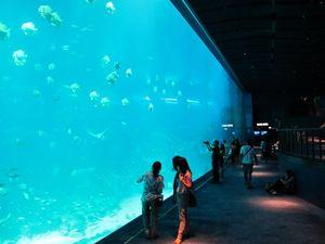 6 Cara Maksimal Liburan ke Tempat Wisata Akuarium