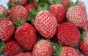 Bubbleberry, Mirip Strawberry dengan Cita Rasa Permen Karet