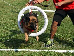 Lomba Lari untuk Anjing