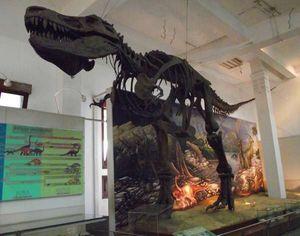 Sabtu Ini, Yuk Ikutan Night at The Museum Geologi