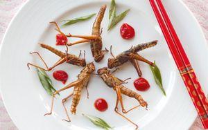 Peneliti Kanada Berharap Serangga dapat Atasi Masalah Pangan Global