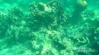 Terumbu karang dan kehidupannya di bawah laut
