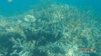 Salah satu aset bawah laut Pulau Harapan