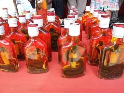 Minuman Ekstrem dari Laos: Whiskey Kobra