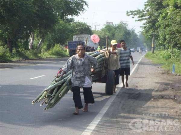 Para Pemanggul Belerang yang Menantang Bahaya dan Penjual Bambu Maraton
