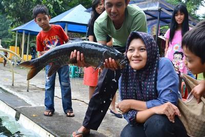 Tak Jauh dari Cirebon, Ada Kolam Berisi Ikan Dewa!