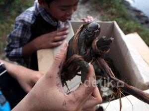Berwisata dan Berburu Kepiting di Teluk Pangpang