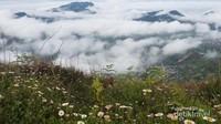 Nikmatnya menyaksikan gunung dan awan ditemani padang lily.