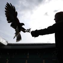 Perkenalkan Rufus, Satpam Udara di Wimbledon