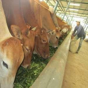 Pengusaha: Impor Sapi Dibatasi, Harga Daging Bisa Rp 200.000/Kg