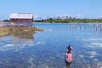 Di desa wisata Suku Bajo, wisatawan bisa diajak bersampan mengelilingi pemukiman Bajo, dan mengenal bagaimana suku ini membaca bintang-bintang. Desanya begitu indah (Bahtiar/detikTravel)