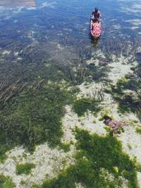 Perairan di Wakatobi yang begitu bening. Traveler bisa diajak mengamati lumba-lumba. Suku Bajo punya kedekatan dengan lumba-lumba (Bahtiar/detikTravel)