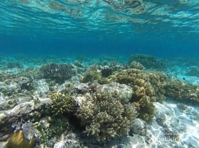 Lihaga, Pulau Surgawi di Minahasa yang Lagi Hit di Instagram