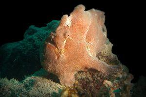 Diving di Buton, Bisa Lihat Ikan Berkaki