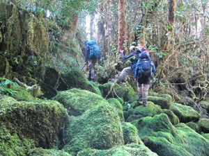 Hutan di Papua yang Belum Pernah Dimasuki Manusia