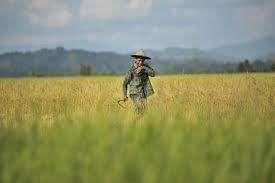 Bulan September, Pulau Jawa Hasilkan 1,1 Juta Ton Beras