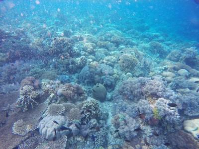 Alam Bawah Laut Bunaken, Cantiknya Terbukti!