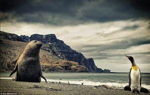 Potret Memukau Gunung Es & Satwa Liar Antartika