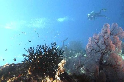 Pulau Menjangan, Surga Bawah Laut di Sisi Lain Bali