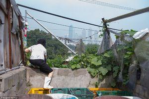 Potret Pemukiman Kumuh di Balik Gemerlap Seoul