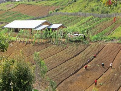 Ada Kebun-kebun Nan Indah di Pedalaman Papua