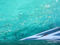 Gerombolan ikan di Phi Phi Island