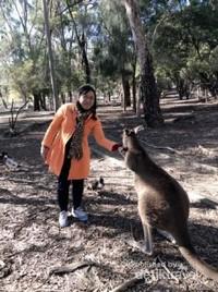 Memberi makan (bersalaman) dengan kanguru