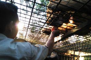 Memberi Makan Singa di Bali Malam Hari, Deg-degan!