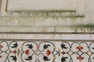 Duh, Dinding Taj Mahal Jadi Hijau Gara-gara Kotoran Serangga