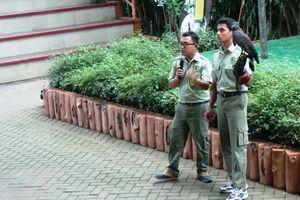 Interaksi Lucu Traveler Cilik dengan Satwa Taman Safari Prigen