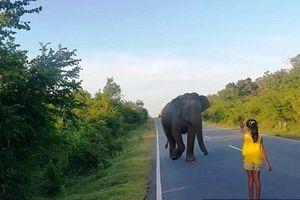Ramai di Internet, Aksi Gadis Cilik Penghalau Gajah di Sri Lanka