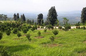 Menikmati Hijaunya Alam Lewat Wisata Agro Bukit Hambalang di Sentul