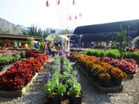 View Begonia Garden