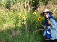 Alang-alang berpadu dengan bunga matahari