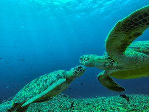 turtles at gili trawangan