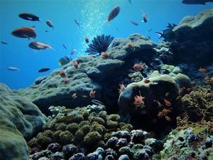 Warna-warni bawah air