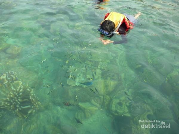 Banyak ikan nemo
