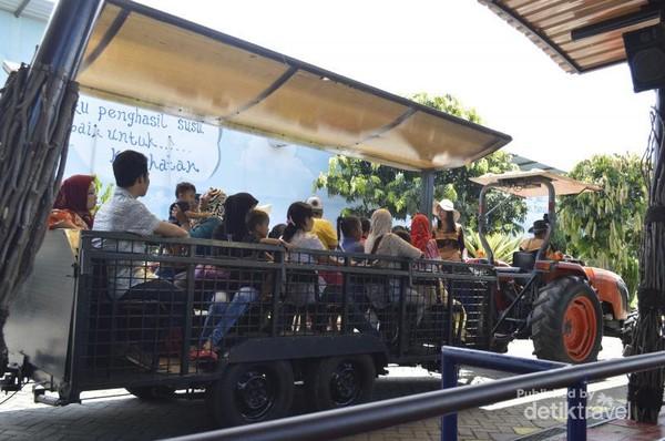 Kereta yang digunakan untuk bersafari ria