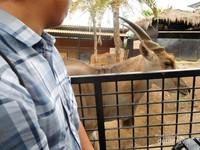 Pengunjung dan hewan dibatasi pagar besi