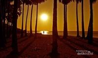 Siluet pohon lontar latar belakang matahari jelang terbenam