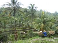 Petani di Desa Tegallalang
