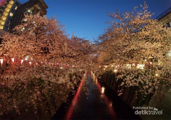 Megurogawa di malam hari