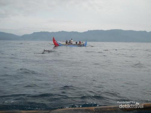 Lumba-Lumba Menawan di Teluk Kiluan