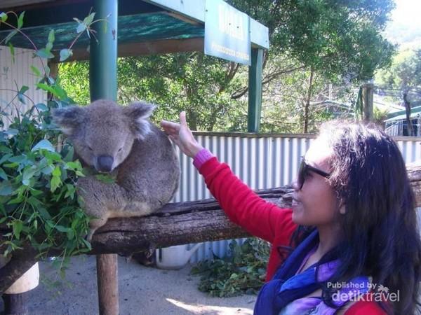 Bertemu koala