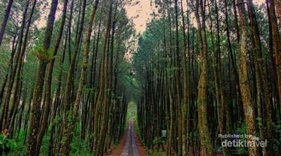 Siap-siap Terbuai Indahnya Hutan Pinus Kragilan