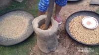 Salah satu kegiatan warga Desa Wae Rebo adalah mengolah biji kopi menjadi kopi yang siap minum secara tradisional