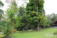 Pohon-pohon yang hijau membuat tempat ini sangat asri