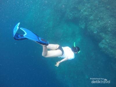 Wajib Coba Sekali Seumur Hidup: Free Dive di Pulau Kakaban