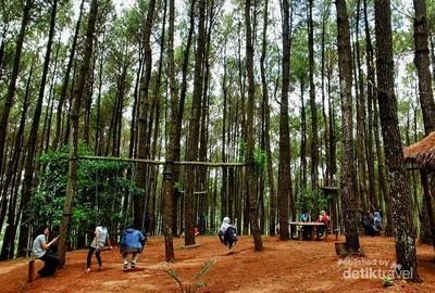 Mau Wisata Romantis, Ajak Pasangan Kamu ke Hutan Pinus di Bantul