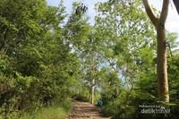 Pepohonan yang ada menjadi penyejuk terutama saat udara panas